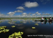 Agusan Marsh Wildlife Sanctuary